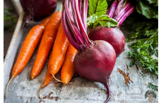 Осінній збір коренеплодів: терміни збору моркви, буряка та ін., правила зберігання
