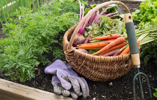 Красивый огород не миф, а реальность, декоративный огород – новый тренд в организации дачного участка
