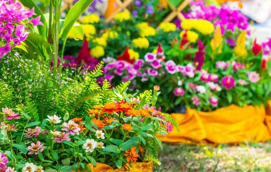 Проблемные и особенные места в саду – как подобрать растения и благоустроить каждый уголок