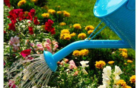 Основні роботи в саду в липні: зустрічаємо екватор літа