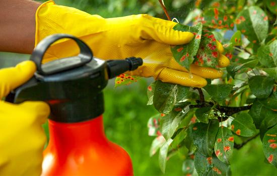 Фунгициды – здоровый сад и высокий урожай