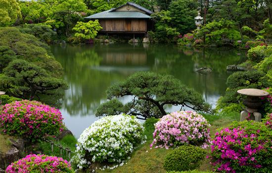 Японский сад: как придать саду стиль и колорит, основные принципы, выбор растений