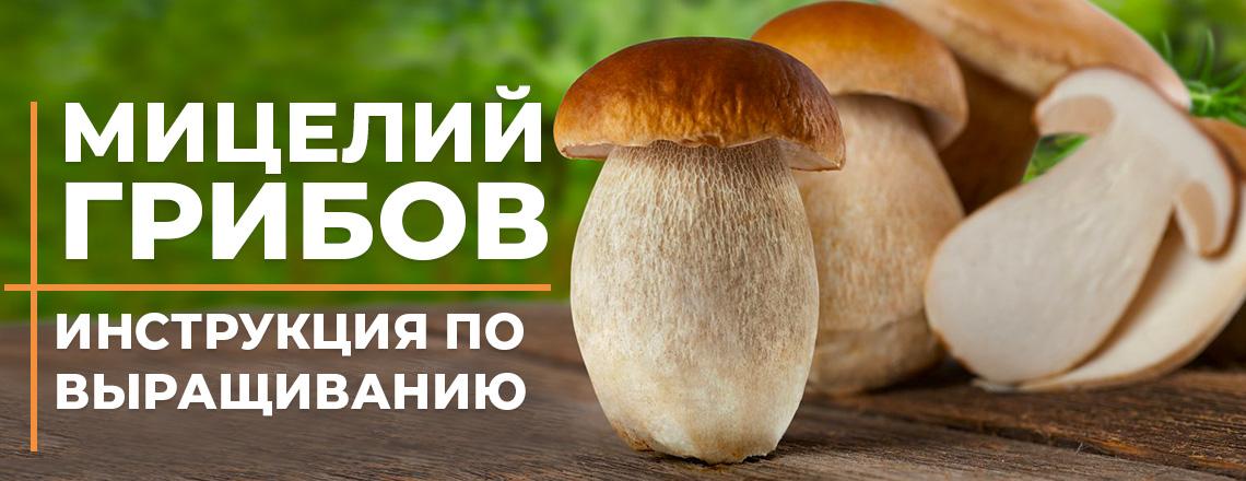 Мицелий грибов - инструкция по выращиванию, все что нужно знать