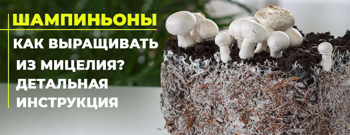 Шампиньоны: как вырастить грибы на грядке, в теплице, в домашних условиях - пошаговая инструкция