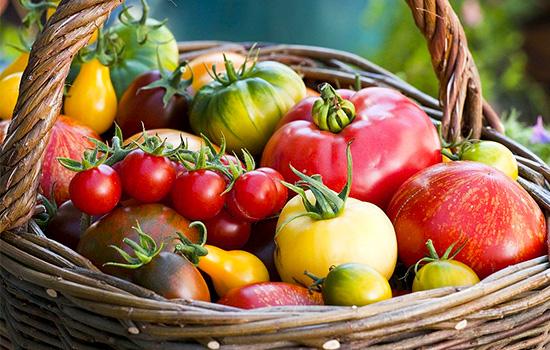 Типи томатів: детермінантні та індетермінантні – відмінності, особливості, переваги