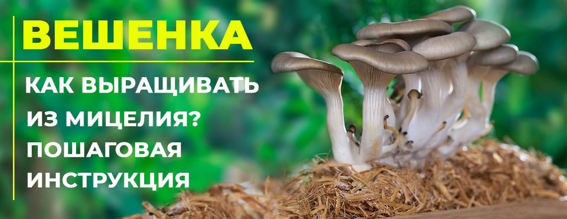 Вешенки: как вырастить вкусные грибы из мицелия в саду, и в домашних условиях?
