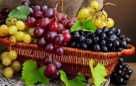 Топ-10 сортов неукрывного винограда - выбираем зимостойкие столовые сорта