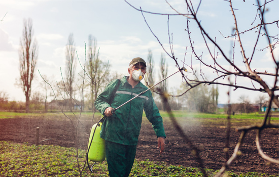 Плодовий сад: осіння обробка дерев, викорінює обприскування