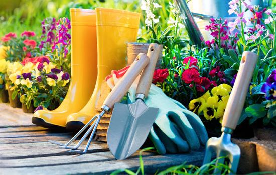 Догляд за квітами: 5 основних інструментів квітникаря в саду