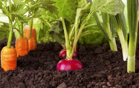 Насіння на стрічці – дружні сходи та швидкий посів овочів, вирощування без виснажливого проріджування