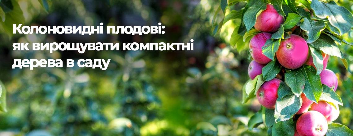 Колоновидні плодові: як вирощувати компактні дерева в саду