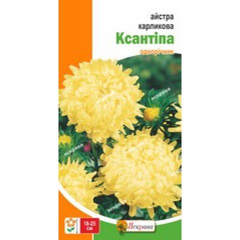Астра карликовая Ксантипа 0.3 гр