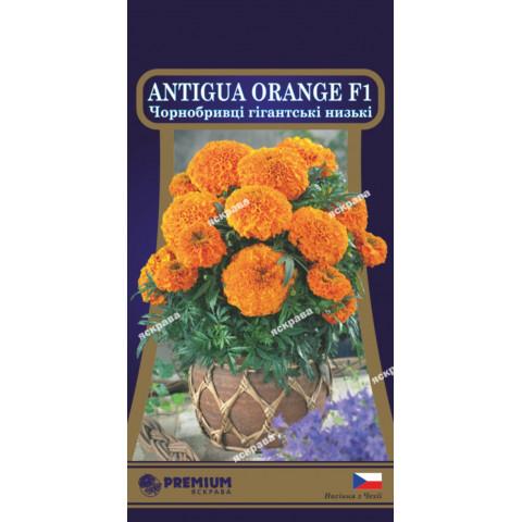 Чорнобривці низькорослі Antigua Orange F1 (гігантські) 5 насінин
