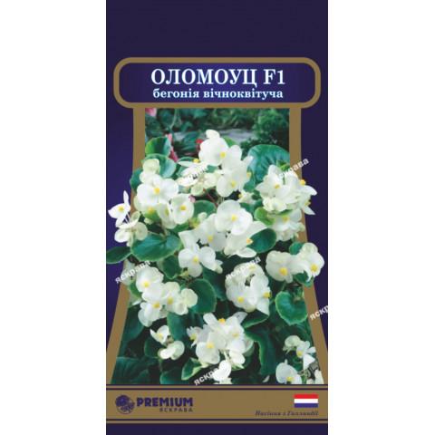 Бегонія вічноквітуча Оломоуц F1 (10 насіння в оболонці)