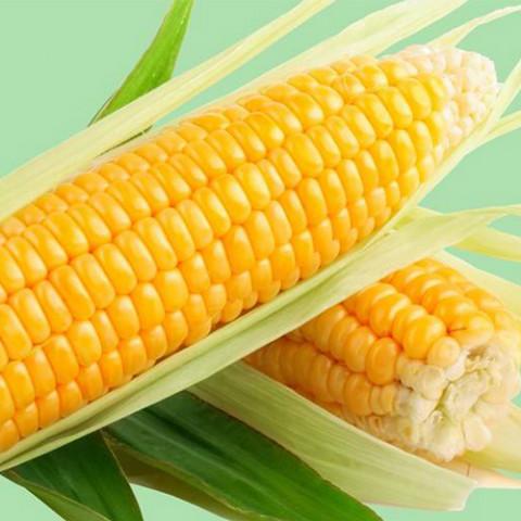 Кукуруза гибрид Кадр F1 / 1 кг