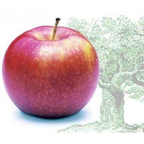Яблуня Джонаголд