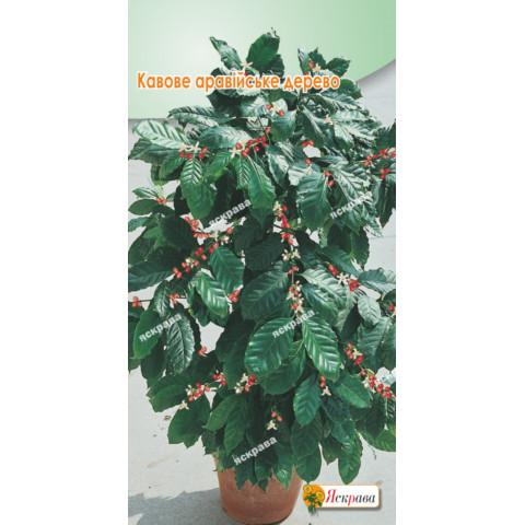 Кавове аравійське дерево 2 гр