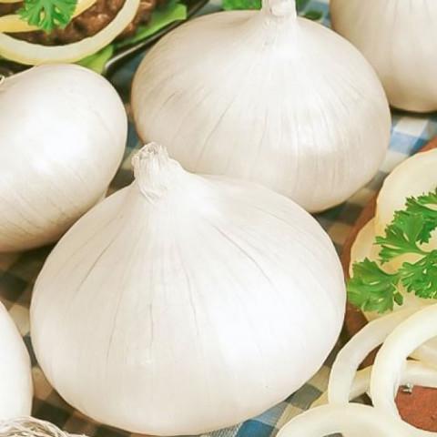 Лук севок Гледстоун 0.5 кг