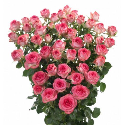 Роза Спрей Розовая