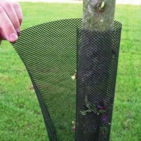 Сітка Treex (19.5*81.0) для захисту саджанців від гризунів