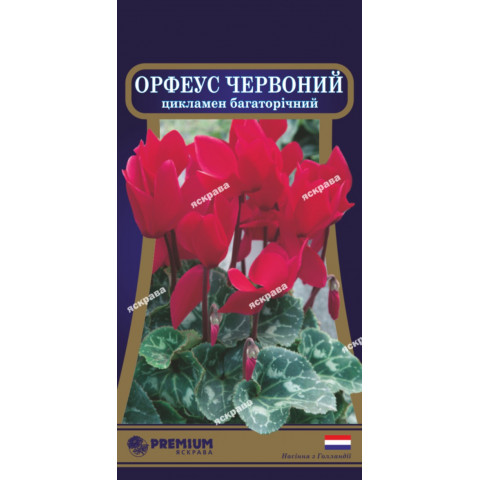 Цикламен многолетний Орфеус красний 5 семян