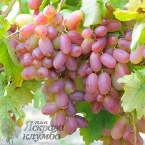 Виноград Перетворення