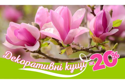 Квітуча Весна! Декоративні кущі!