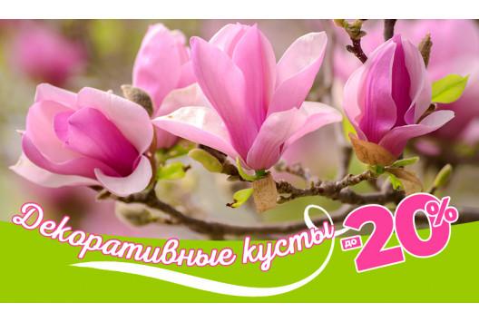 Цветущая Весна! Декоративные кустарники!