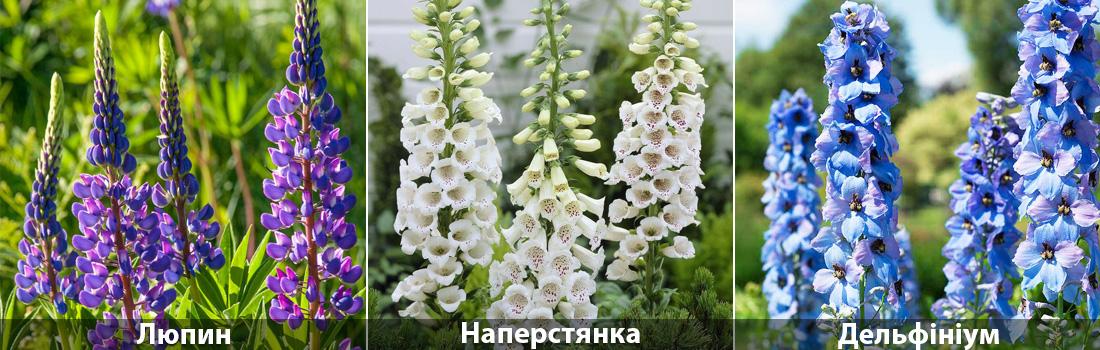 Люпин, Наперстянка, посадка насіння влітку фото