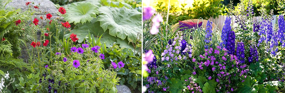 Герань в садовом дизайне, фото