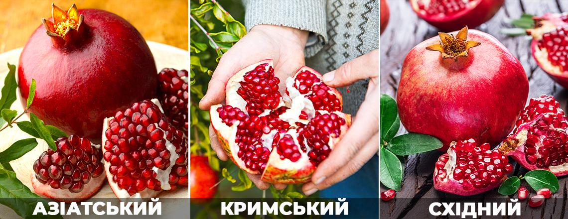 Кращі сорти граната: Кримський, Східний, Азіатський, фото, опис