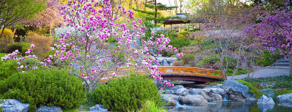 Японский сад ,проектирование фото