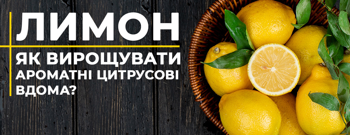 Лимони, найкращі сорти, вирощування вдома