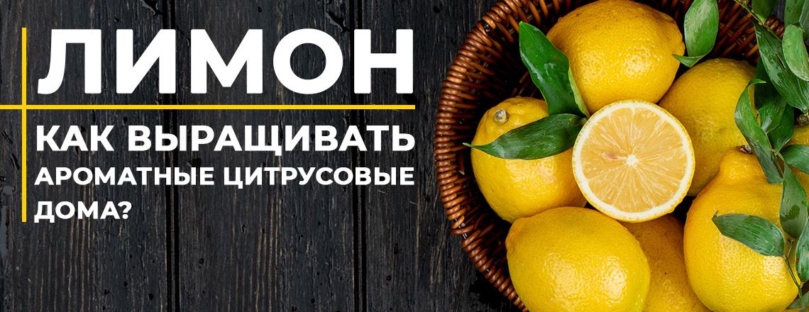 Лимоны лучшие сорта, правила выращивания