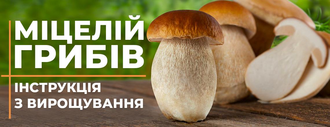 Інструкція з вирощування грибів, фото