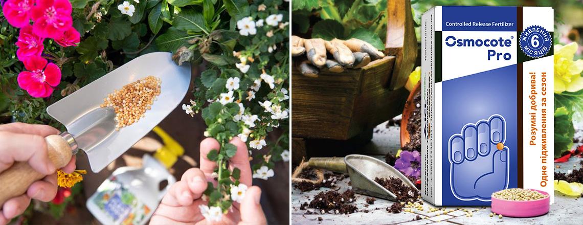 Підживлення рослин добривами осмокот, фото