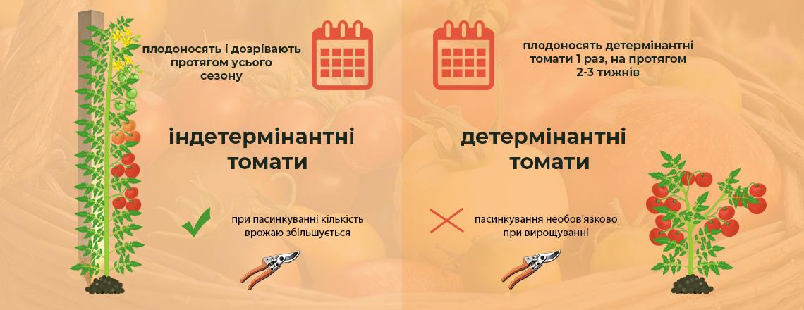 Детермінантні та індетермінантні томати, різниця фото