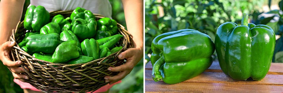 Снять с куста зеленый перец фото