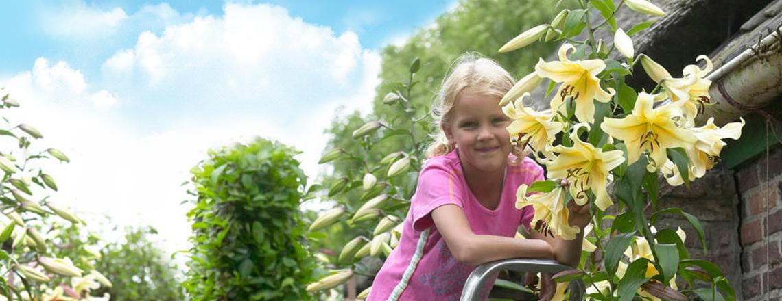 Лілії дерева - ТОП 10 кращих сортів для вашого саду