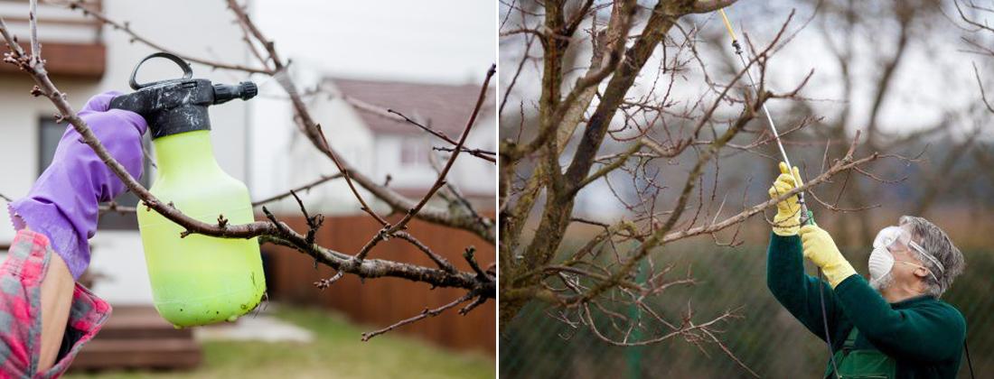 Оприскування плодових дерев осінню