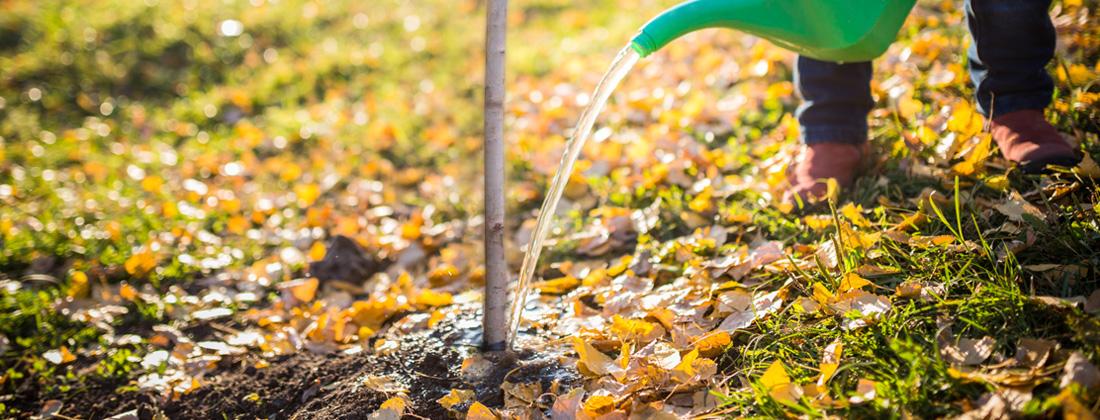 Осенний полив фруктовых деревьев: правила, фото