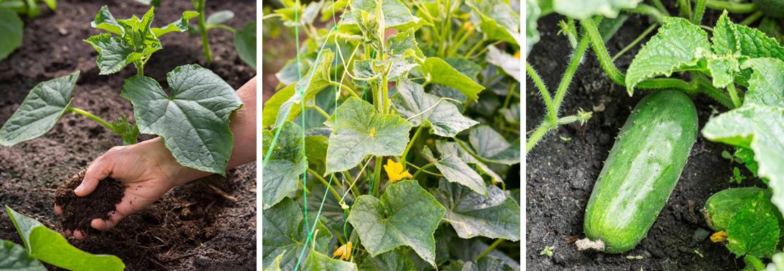 Повторные посевы семян, зелени и овощей