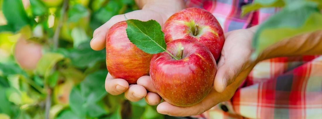 когда собирать и как хранить плоды