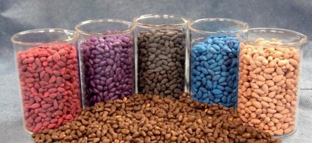 дражоване насіння