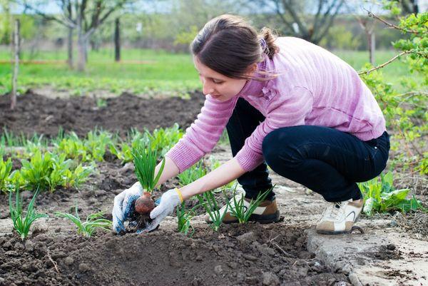 Основные работы в саду в мае: завершаем посевной сезон