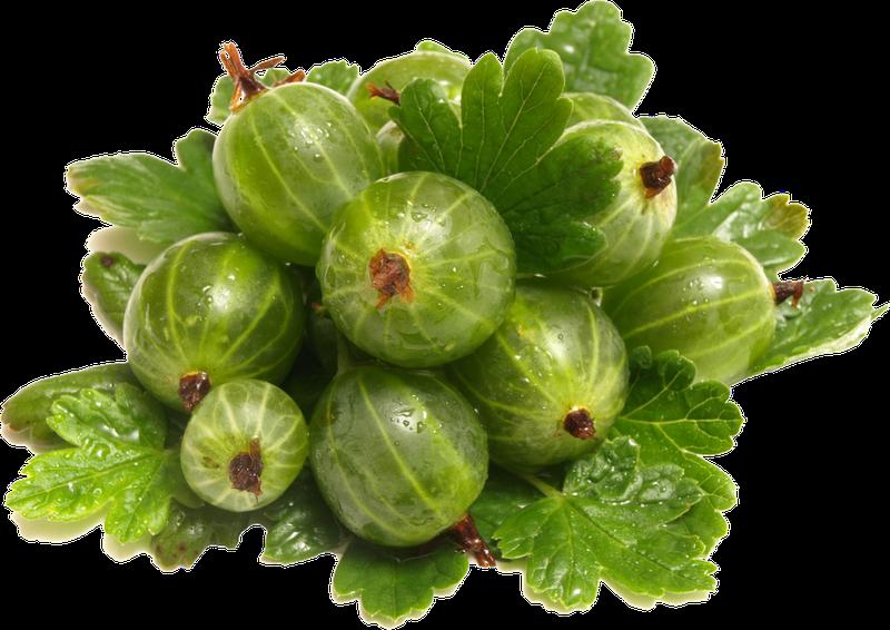 Агрус зелений. Сорт Смарагдовий