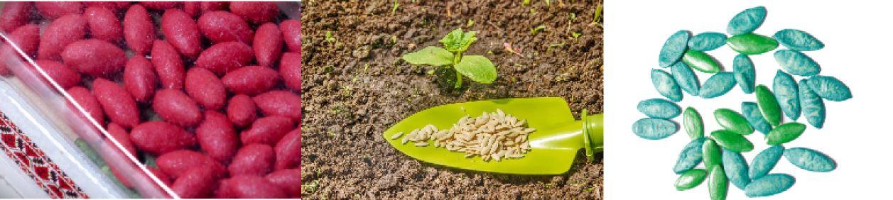 Обычные семена огурцов, дражированные, глазурованные, обработанные, фото