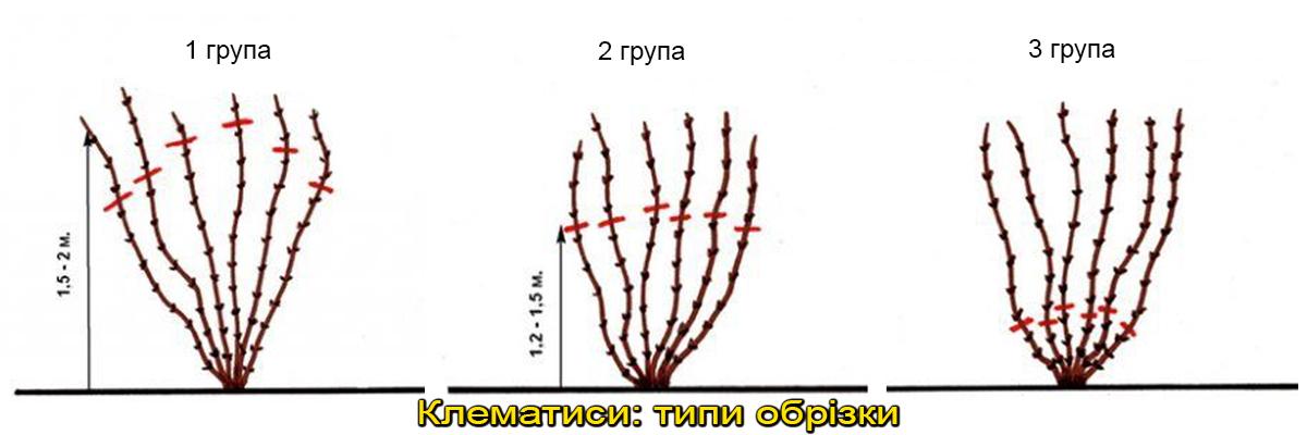 обрізка клематиса разні групи, фото