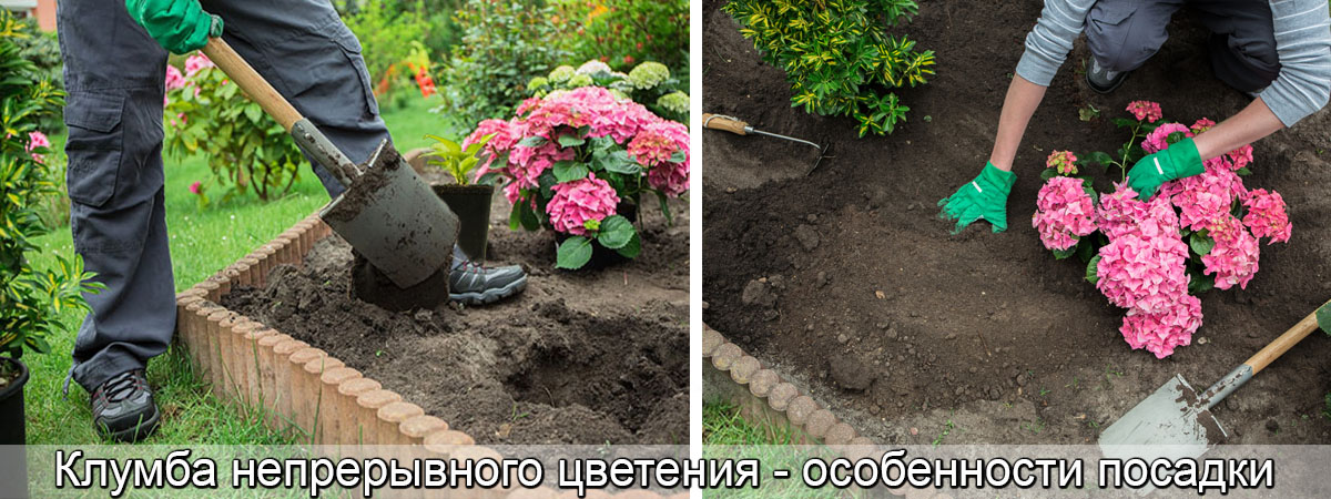 схема посадки клумбы непрерывного цветения, фото