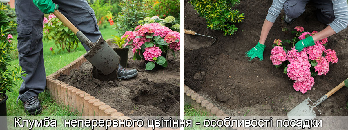 схема посадки клумби безперервного цвітіння, фото